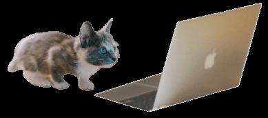 検索する猫ちゃん