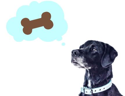 骨を思い浮かべる犬